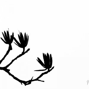 10_Branches