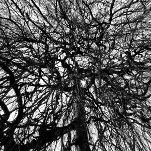 4_Branches