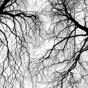 5_Branches