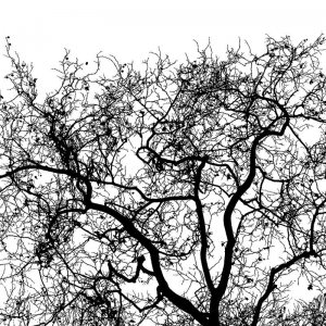 7_Branches